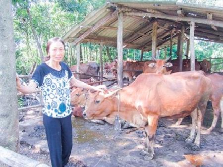 Người phụ nữ vượt khó làm giàu tại Quảng Trị