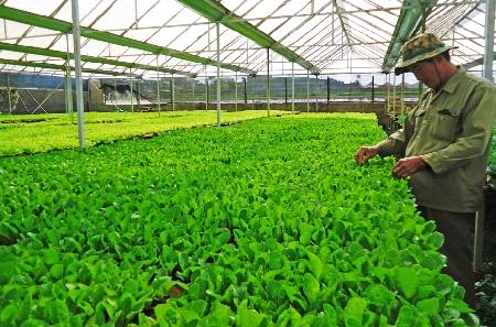 Biện pháp chăm sóc giống rau trong vườn ươm