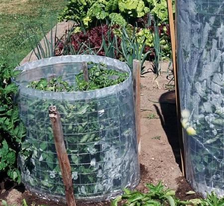 Trồng cà chua trong lồng lưới